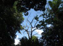 Pădure fără uscături