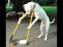 rahatul de câine