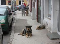 lătrăturile câinilor